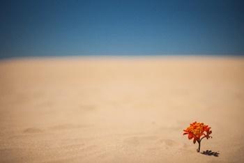 世界ふしぎ発見みたいな~エジプト発見